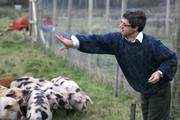 Nicky Mackintosh feeding the pigs